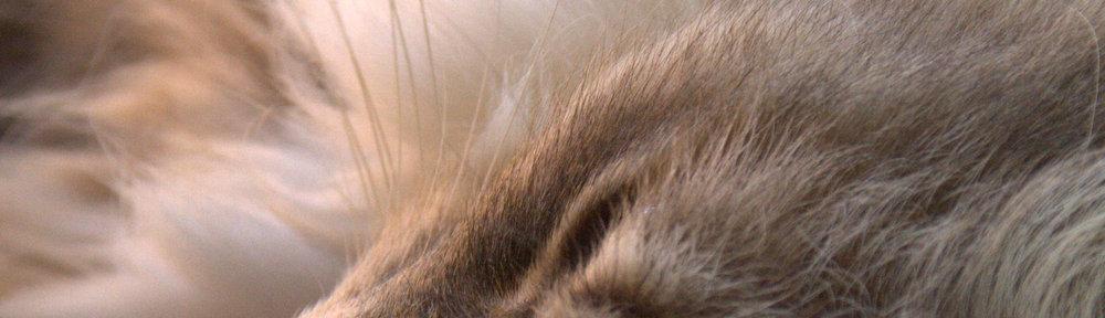 Beskåret bilde av en sovende katt